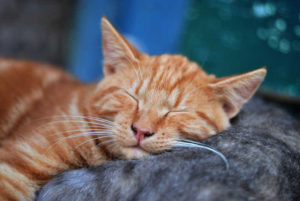 A cat demonstrating how to fall asleep even if you can't stop thinking