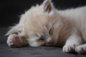 How to Hypnotize Someone to Sleep