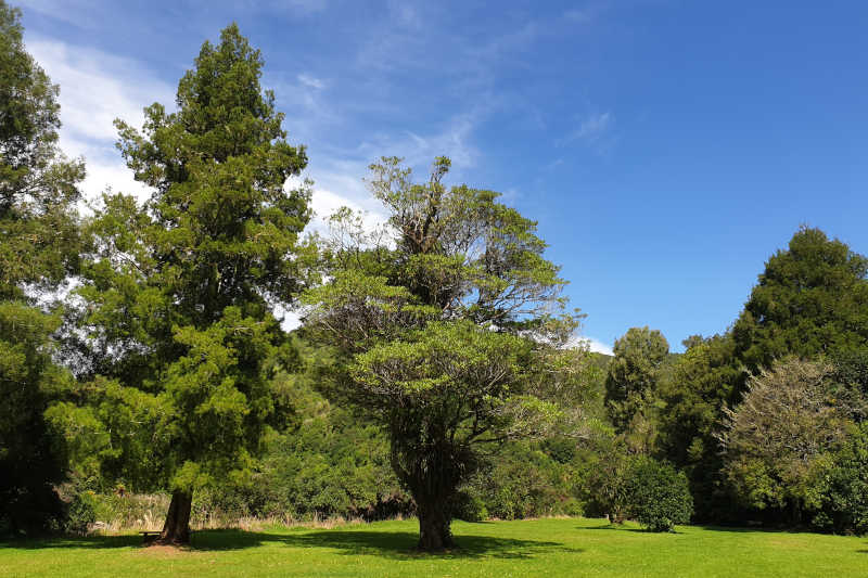 Hypno-Transformation Script Become a Tree